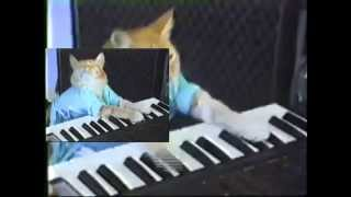 [≈200 subs/B-day presents/Sparta Duel]Keyboard Cat plays a Sparta Spring Remix