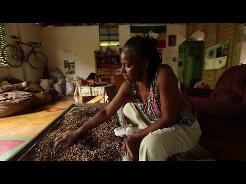 Les briquettes de Shirley : un grand bond vers les énergies propres