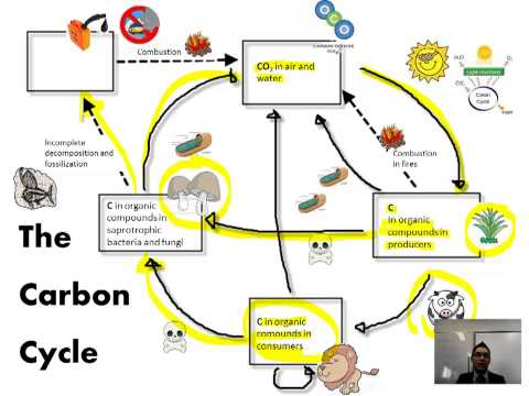 ib biology greenhouse effect notes