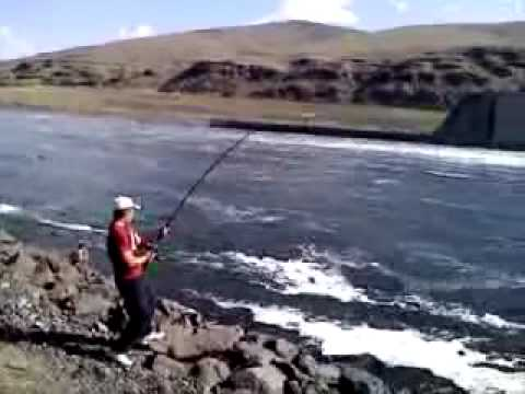 Sturgeon fishing lower granite dam youtube for Dam fish count