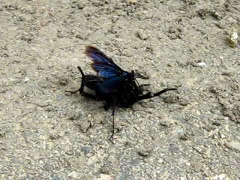 pelea mortal,araña v avispa