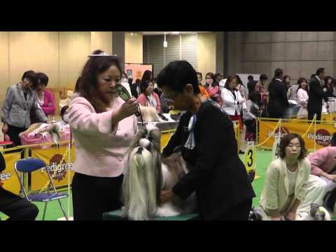 2014 FCI Asia  Pacific Section Dog Show(FCI アジア・パシフィックセクション)