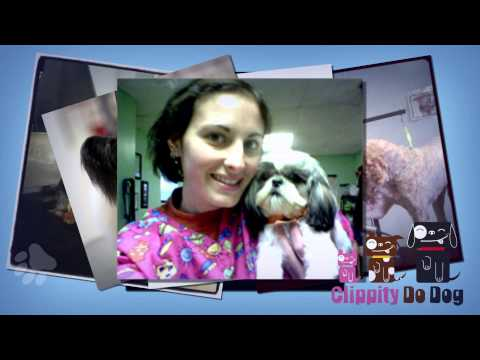 Clippity Do Dog - Cortland NY Professional Dog & Cat Grooming Services