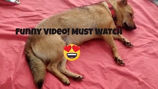 Dog loves sleeping in Human Bed! Funny Video!