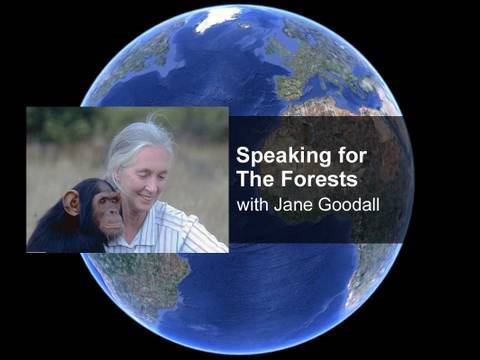 Speaking For the Forests with Dr. Jane Goodall