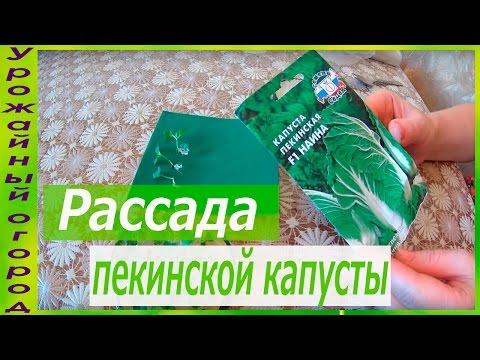 РАССАДА ПЕКИНСКОЙ КАПУСТЫ В ГИДРОГЕЛЕ!!!ОЧЕНЬ КОМПАКТНЫЙ СПОСОБ!