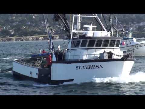 American Fisherman Squid Monterey