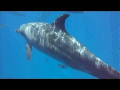 Dolphin penis :) thumbnail