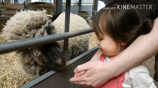 Odds Farm Park# Family day out Ep.2 # Feeding adorable farm animals