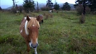 Appalachian Trail Loner #27 HIGHLANDS PONIES 2012 Thru Hike