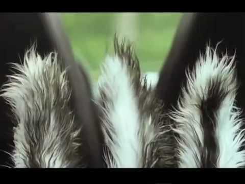 Trailer Locuras en el bosque (Furry vengeance)