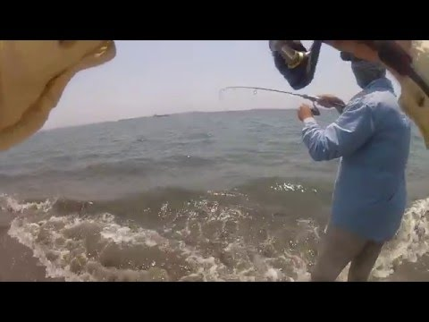 Pesca de macabí - Fishing fun - Ladyfish