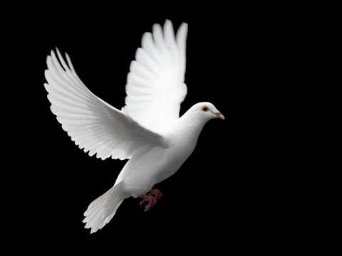 Starsailor - White Dove