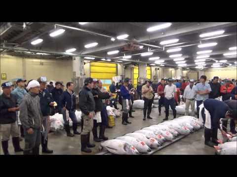 【Tokyo Sightseeing#2】Tsukiji Fish Market#1/Tuna Auction Tour