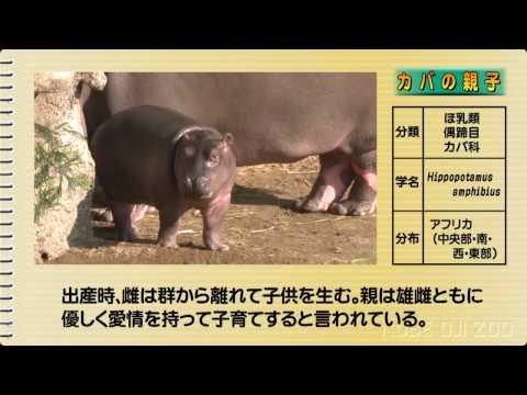 神戸市立王子動物園おすすめ図鑑 その1