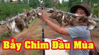 Bẫy Chim Sẻ Non Đầu Mùa Với Tiếng Sẻ Hủy Diệt 2019- Nhặt Chim Mỏi Tay
