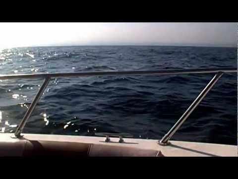 AIDAblu Muscat +Delfine HEINZlive1