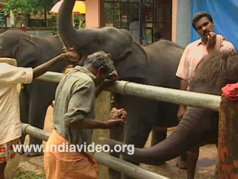 Lunch Time at Kodanad Elephant Training Centre