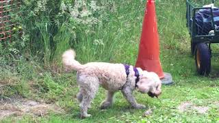 Dog Training Using Recallers Games is an opportunity for change...