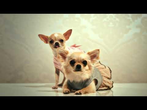 Alta Moda Europea Canina tienda de ropa para perros (vestidos para perros, abrigos para perros...)