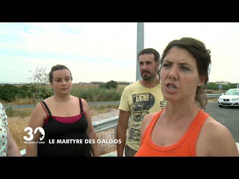 Le martyre des Galgos