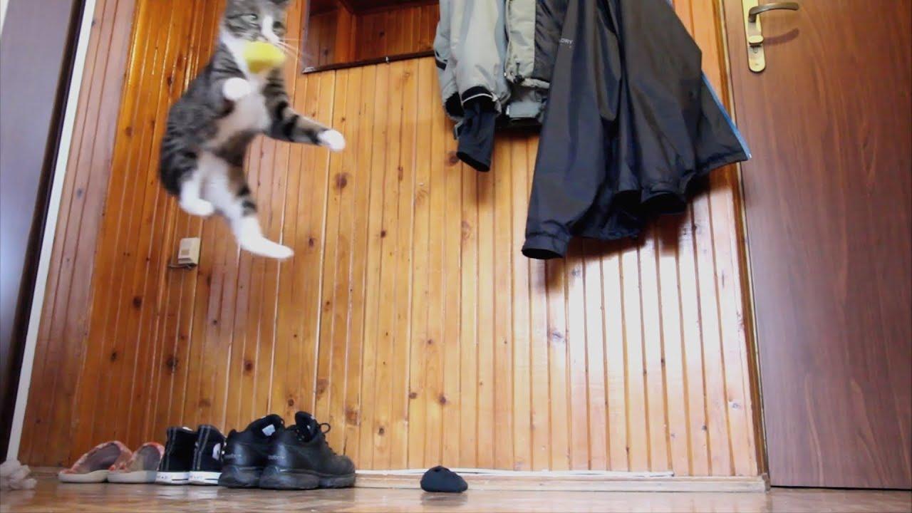 Ce chat se prend pour un kangourou