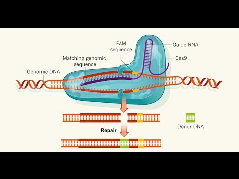 Gene Editing Technology Used In Humans For The First Time!