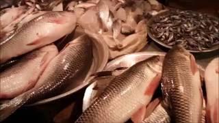 Fish Market Dhaka Bangladesh