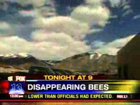 Disappearing Bees