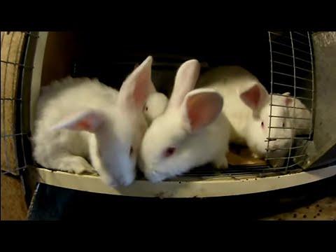 Сено для Кроликов. Давать сено или нет???