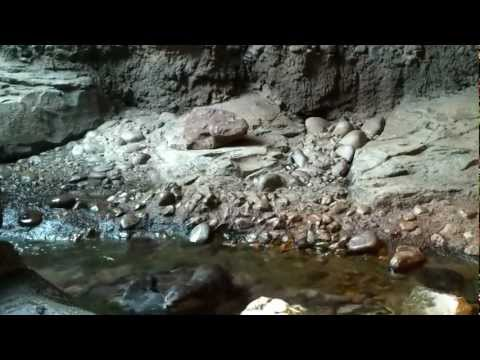 Male Otter Is Trying To Rape Female Otter video