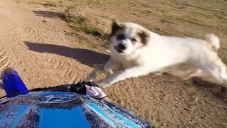 ANGRY Dogs, Birds, Deer & A TIGER VS BIKERS - WHEN ANIMALS ATTACK!! (Or Just Want To Say Hi)