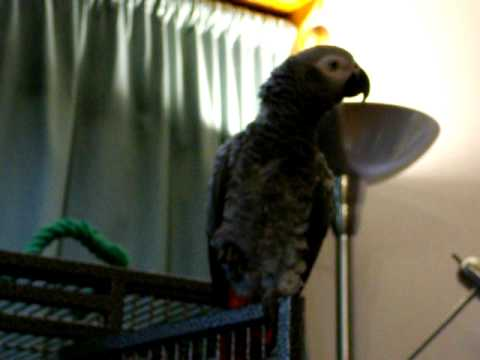 Violet The African Grey Part Xxx video