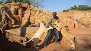 Living With Lions In Africa