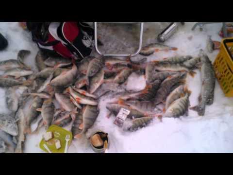 рыбалка на озере зайсан форум
