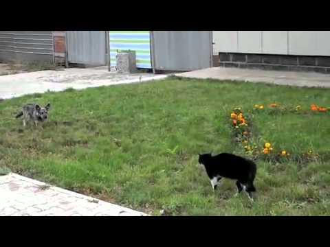 因縁の対決?!犬VS猫 どちらが勝つかクライマックス!