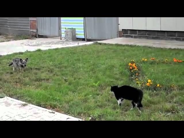 gato vs perro el duelo