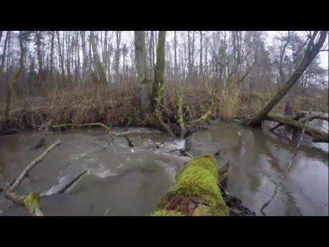 ловля жереха в калининградской области