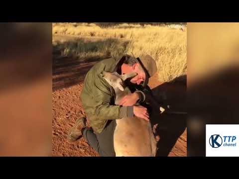 Đây là cách mà các con vật trả ơn người đã cứu sống nó
