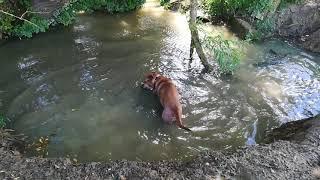 Stupid dog lol(2)