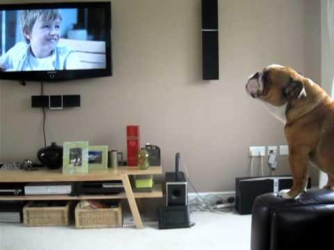 Perros - Perro imitando a elefante