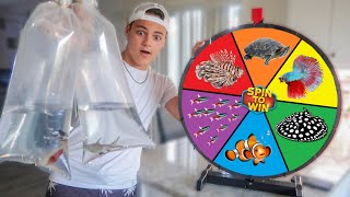 Spin the MYSTERY Wheel & BUYING whatever it Lands on - Challenge