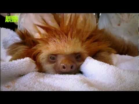Spike Baby Hair Cute Baby Sloth's Hair Spiked