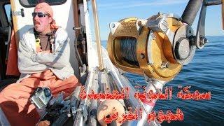 سمكة التونة العنيدة هجوم القرش