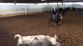 Catahallic- Jared Lesh cowhorses