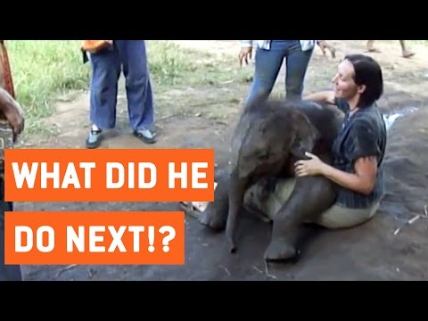 YOU'LL NEVER BELIEVE WHAT THIS ELEPHANT DOES TO THIS PERSON!