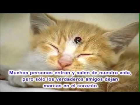 Demis Roussos - En El Nombre De La Amistad (Song For The