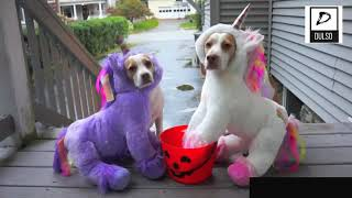 Dogs wearing funny costumes
