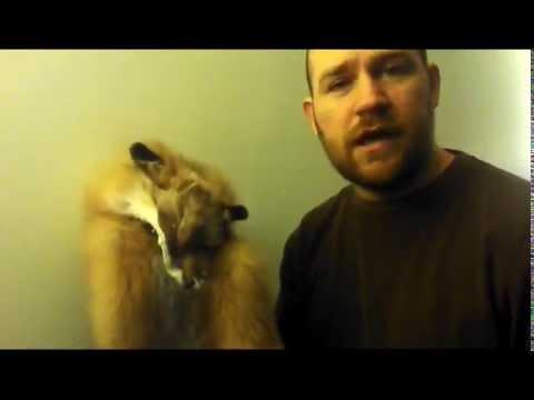Alum Based Tanning Red Fox Aluminum Sulfate Method