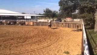 Chance- Jared Lesh cowhorses